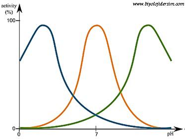enzimlere pH etkisi
