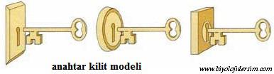 anahtar kilit modeli