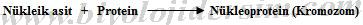 nükleoprotein