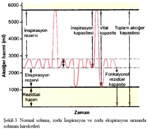 akciğer kapasitesi