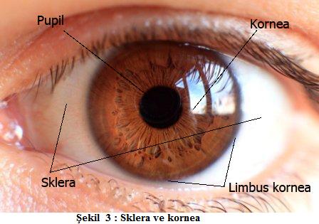gözü koruyan yapılar