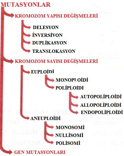 mutasyon çeşitleri
