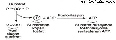 substrat düzeyinde fosforilasyon